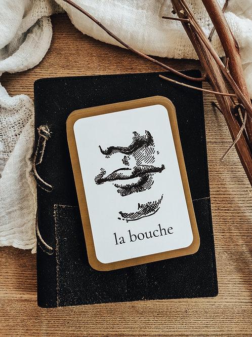 French Body Term Flashcards
