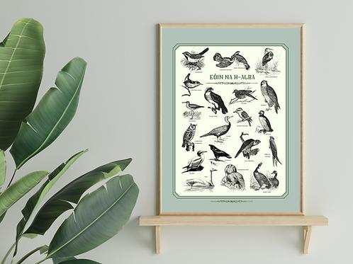 Scottish Gaelic Birds Print
