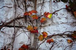 leaves on wall