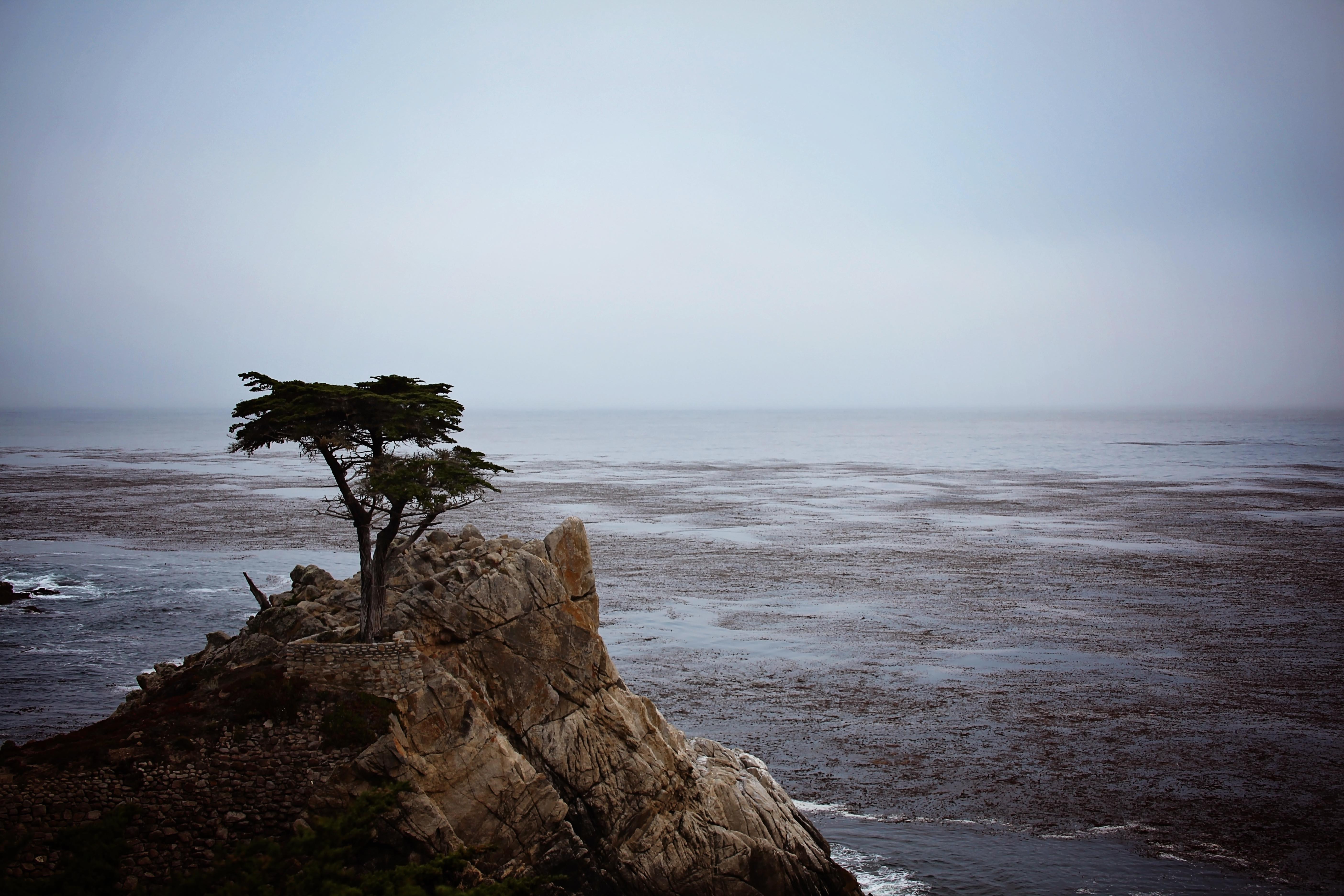 monterey lone tree