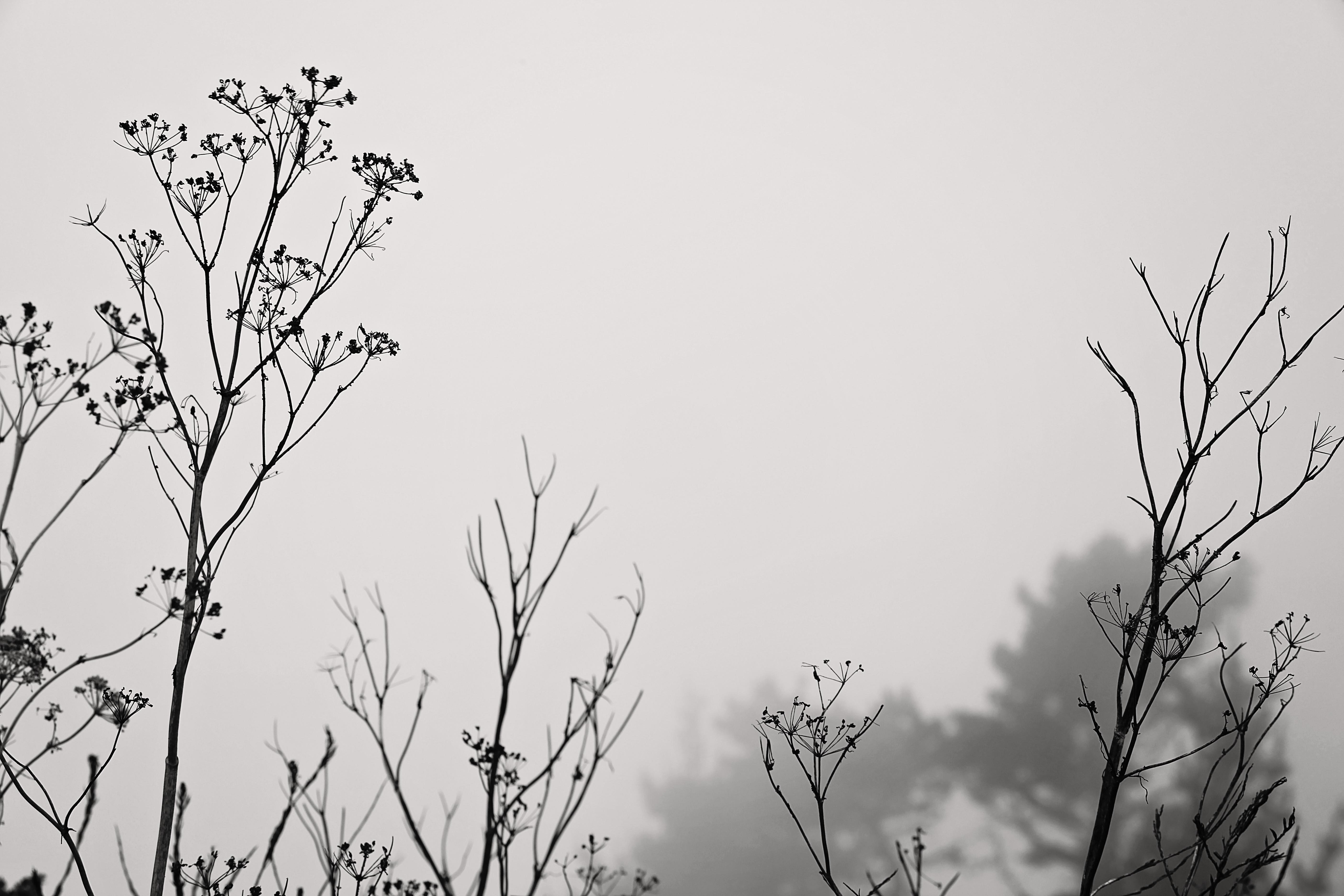 muir weeds