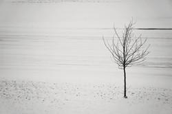 Kalamazoo tree