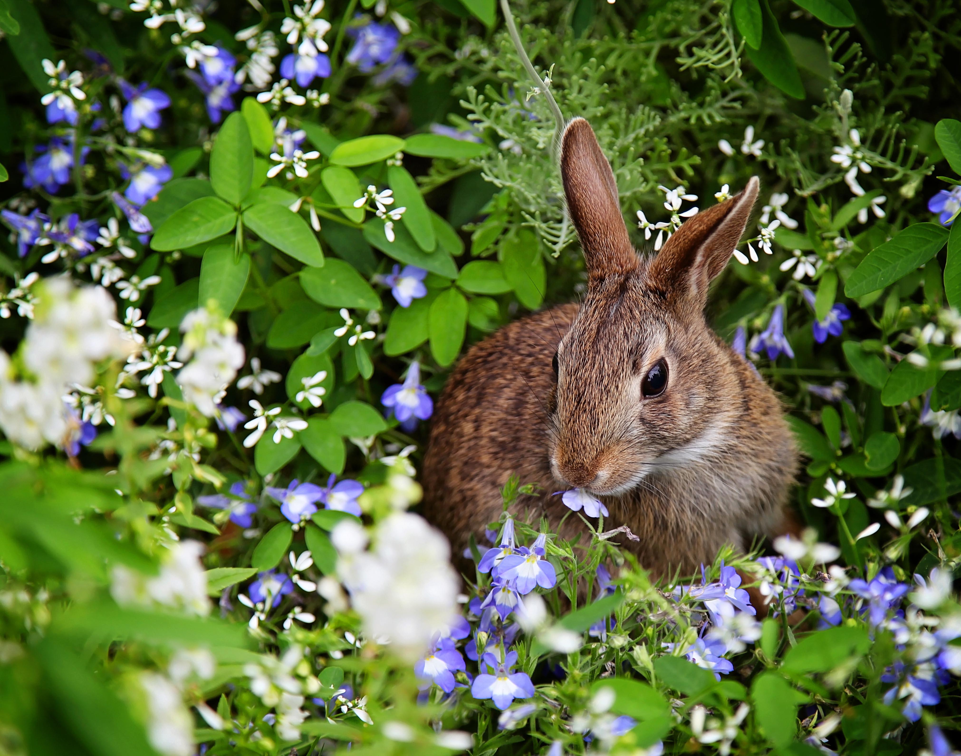 Bunny at Epcot