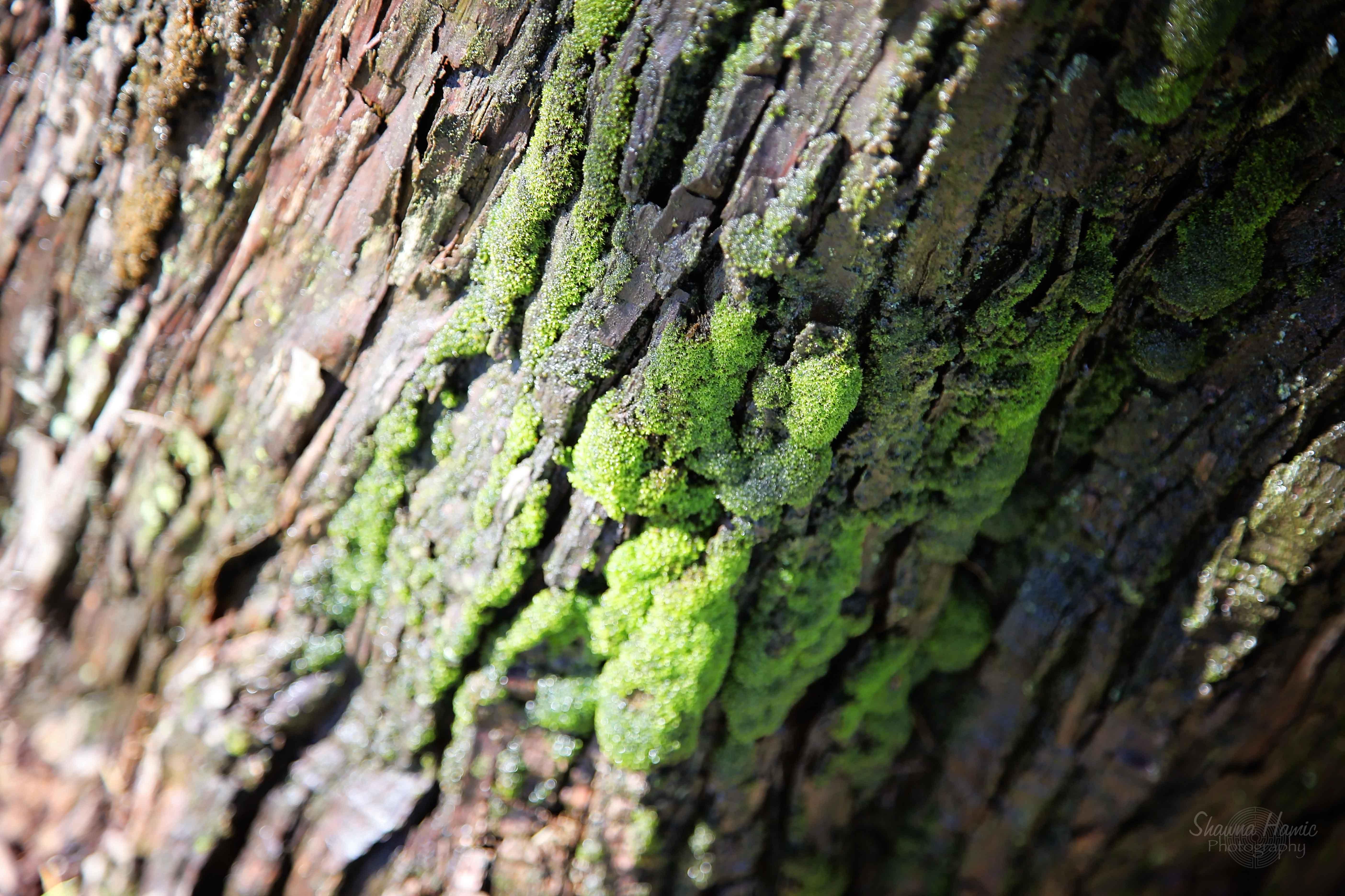 Muir Moss