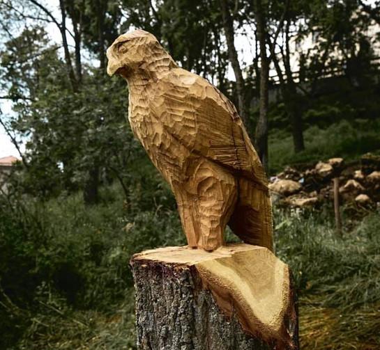 Falco - A.G | Parco della Mandarra.jpg
