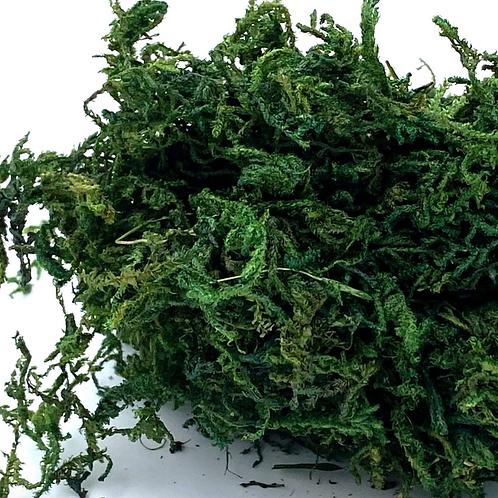 Dried Green Moss