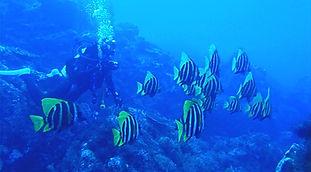 神津島 ダイビング ファンダイビング