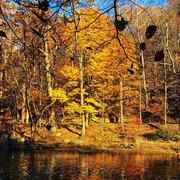 Rock Creek late autumn harmony washington DC