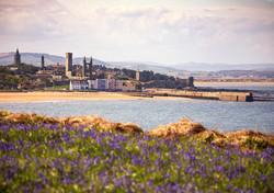 Hyacinths and the harbour