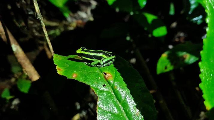 Selva Amazonas 2.jpeg