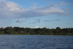 Rio amazonas 5.jpeg