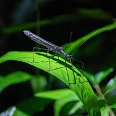 Selva Amazonas 4.jpeg