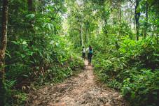 Selva Amazonas 3.jpeg