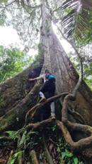 Selva Amazonas.jpeg
