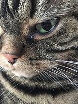 Augenentzündung bei Katzen
