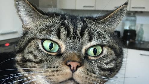 Tränende Augen Katzen