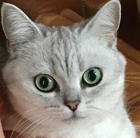 Augenentzündung Katzen