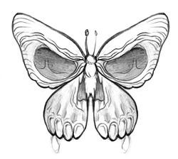 papillon niko2