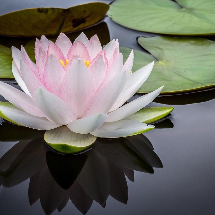 Zen and The Garden Of Life: A Contemplative Retreat at Hakubai Zen Garden
