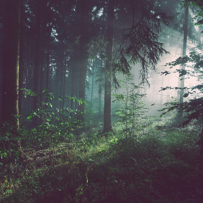 Forest Bathing and Beyond