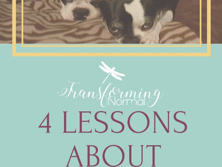 4 Lessons from Boston Terriers About Love