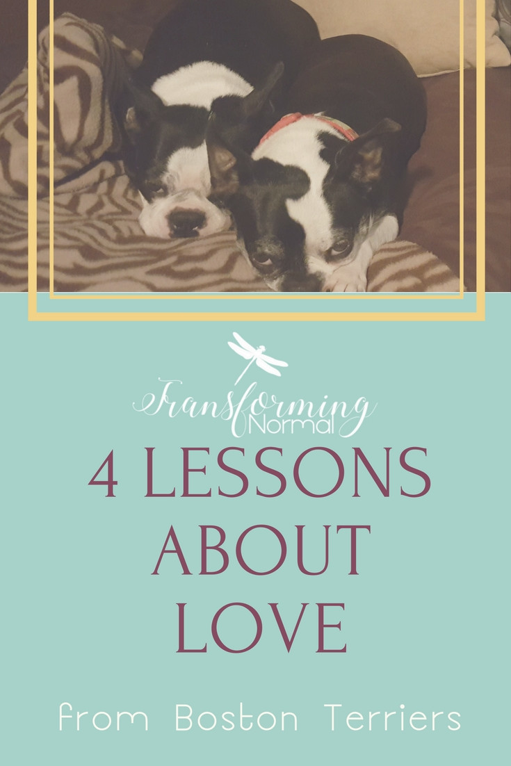 Life Lessons from Boston Terriers