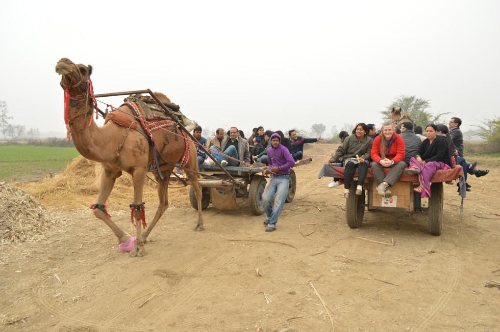 Camelride.JPG