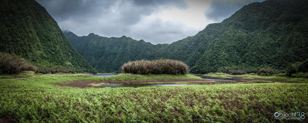 L'île poilue.jpg