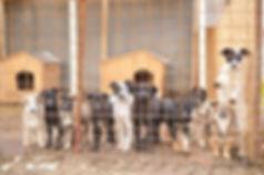 Refuge d'Alina et Anda - Sabine adoptions chiens de Roumanie