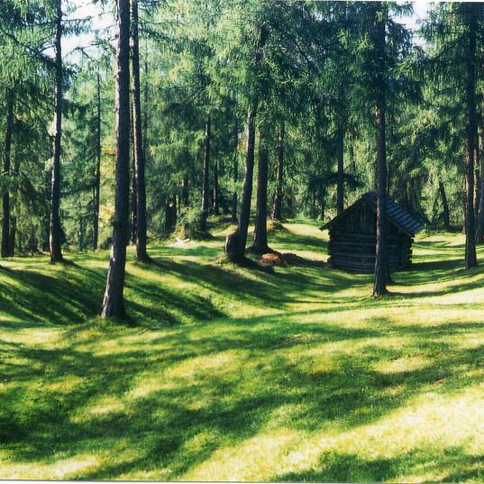 sonniger Lärchenwald