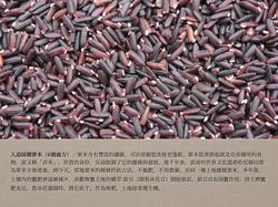 6號處方之人道採購紫米