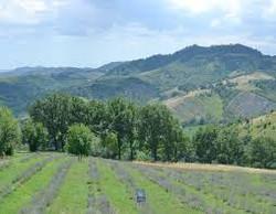 生物動力農場