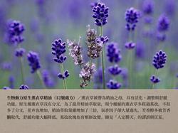 12號處方之生物動力薰衣草