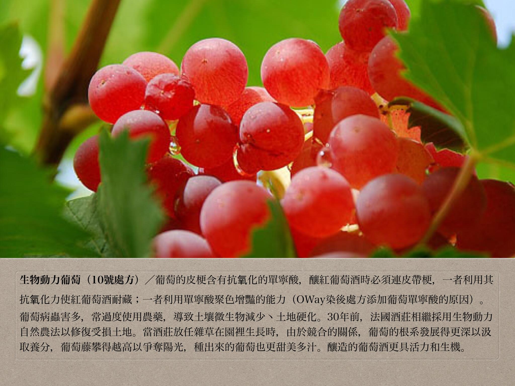 10號處方之生物動力葡萄