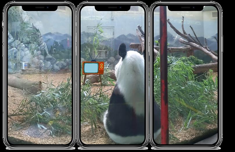reality panda copy.png