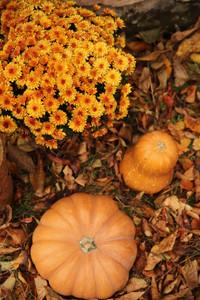 Есенни листа, тикви и цветя