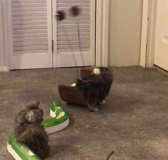 Les chatons en action