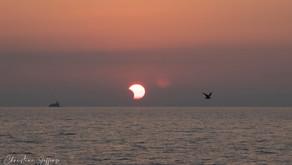 PARTIAL SOLAR ECLIPSE JUNE 10, 2021 AT CHICAGO 31ST STREET BEACH