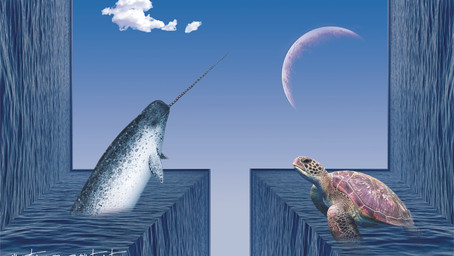 Narwhal and Sea Turtle
