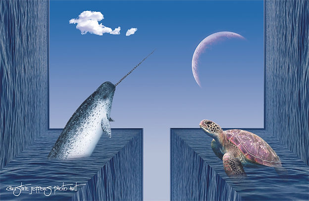 Narwhal and Sea Turtle sm.jpg