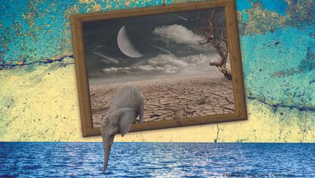 Desert Elephant Finds Water