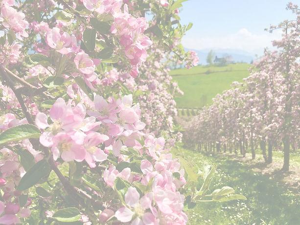 Apfelblüte_edited.jpg