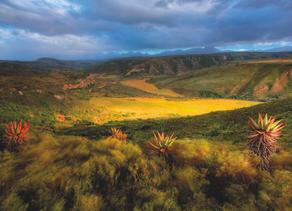 A fynbos safari