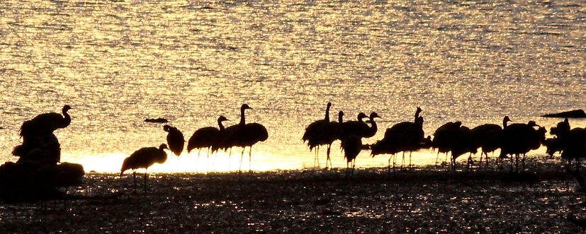 Grues silhouettes