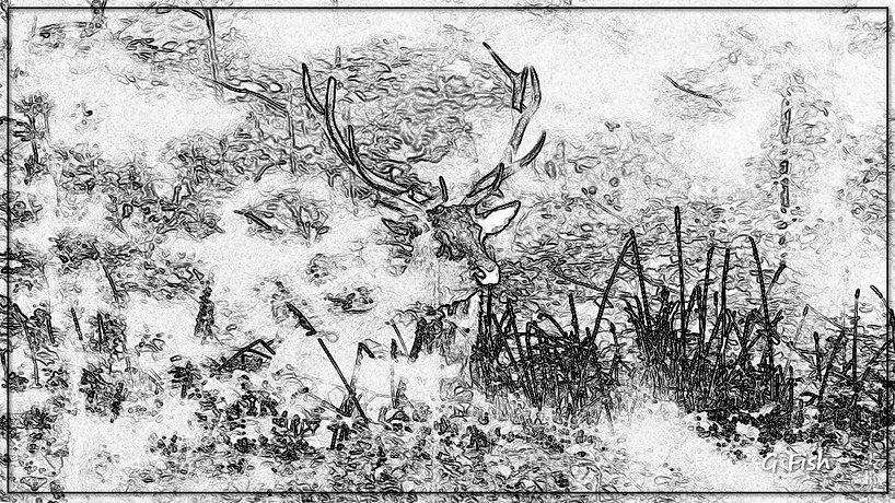 Cerf_derrière_arbre_05.jpg