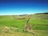 Bisons dans la prairie - Yellowstone