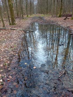 oeufs de grenouilles en forêt