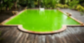Green Swimming Pool Water from Algae Bloom
