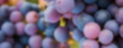 wine-varieties-red-pinot-noir.jpg