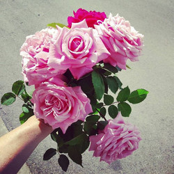 Today's #austin #bouquet of #heirloom #roses for your day